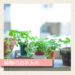 植物のお手入れ
