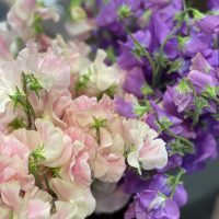 1月のお花